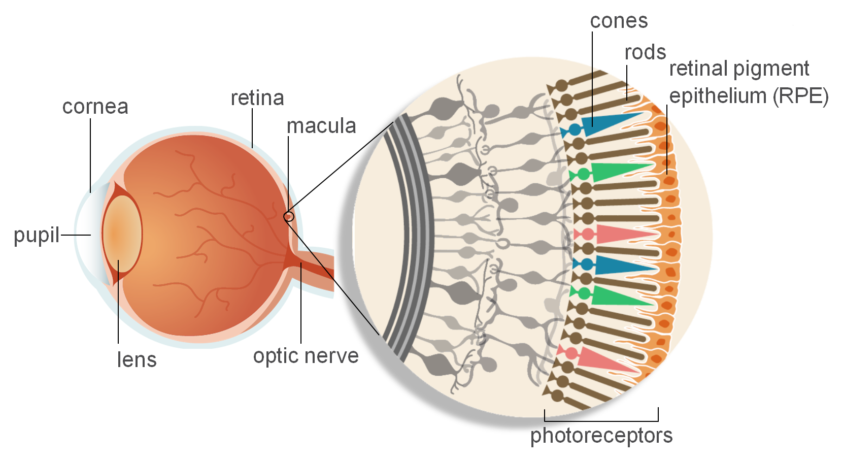 eye_diagram.png
